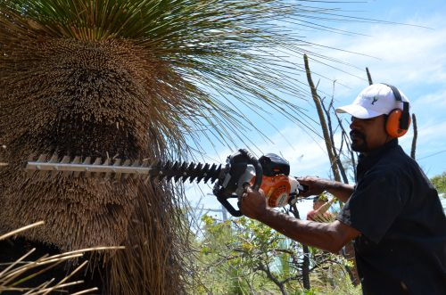 mark Prunning Grass Tree 5