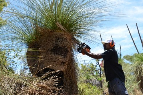 mark Prunning Grass Tree 4
