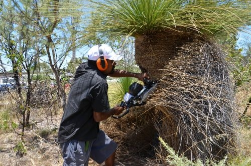 mark Prunning Grass Tree 3